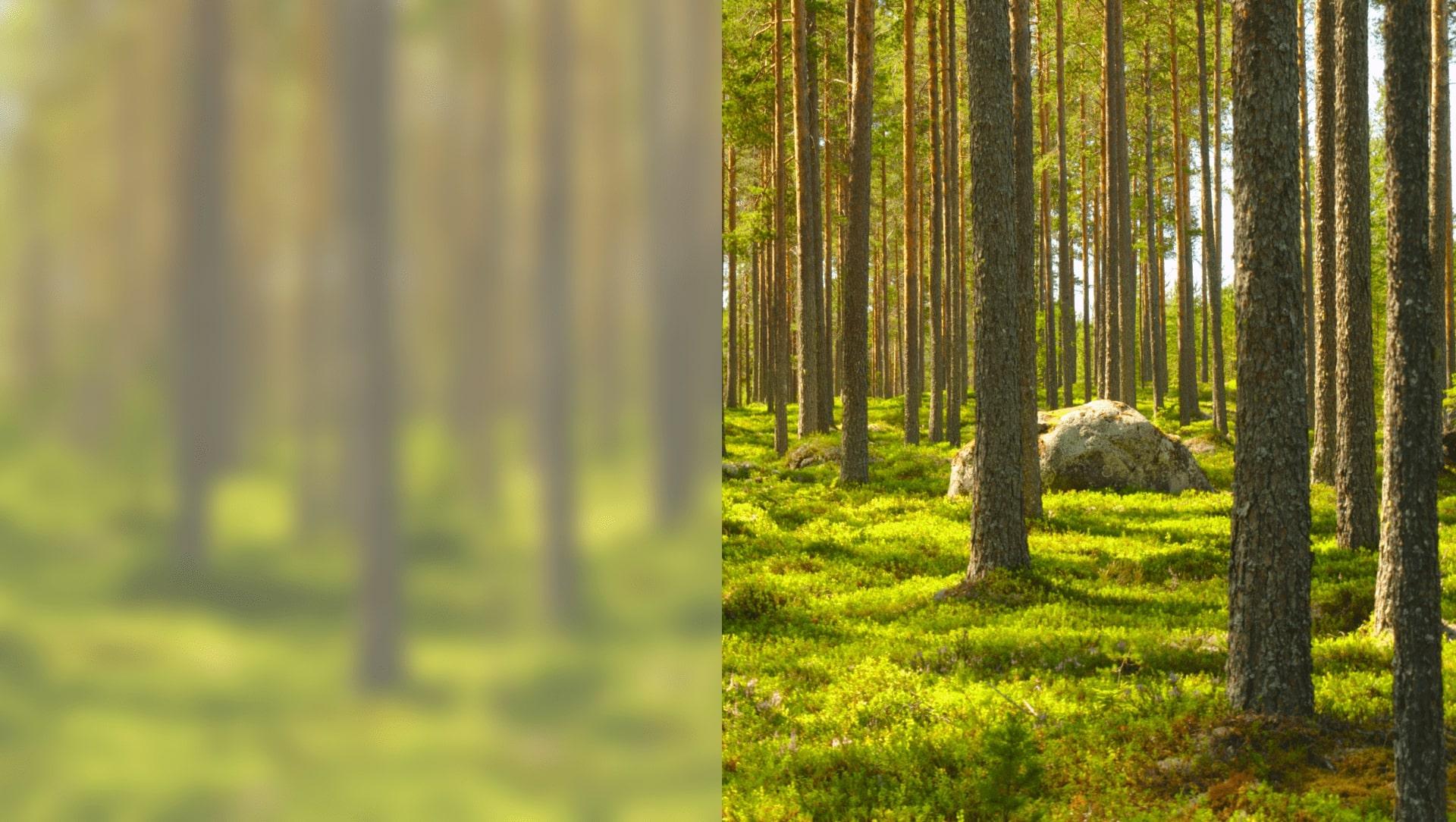 sostenibilità ecologica